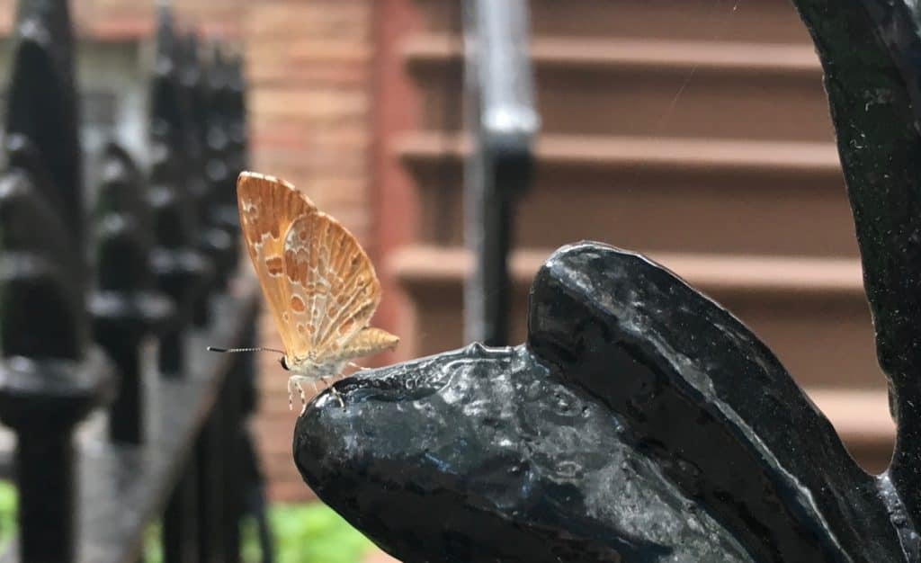 I spy a moth. Nature is all around us, even in Brooklyn, NY. What will Wisconsin have in store for me? I bet they have chocolate there too!