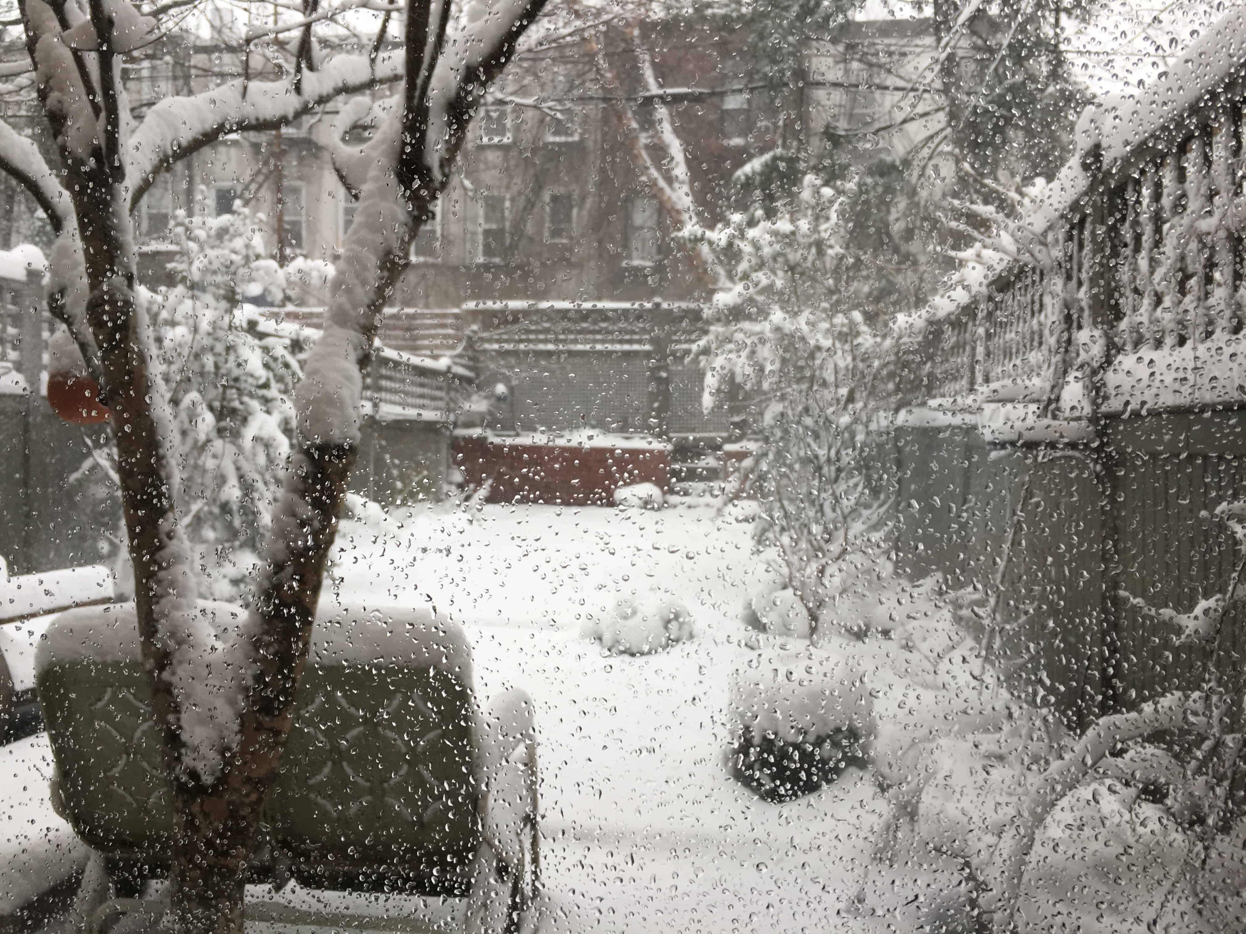 My backyard in the snowstorm.